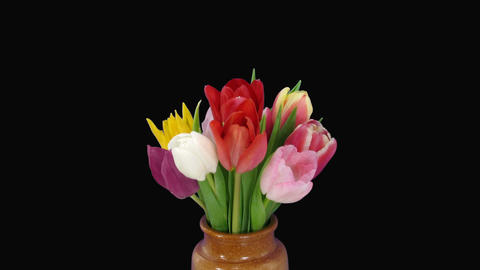 Time-lapse of opening colorful tulips bouquet 5 Stock Video Footage