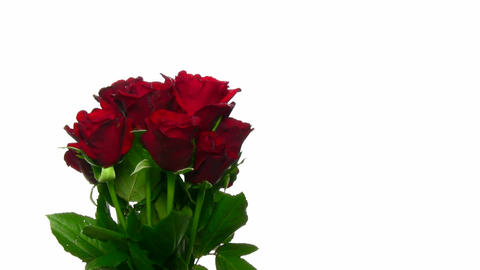 Rotating bouquet of red roses with water drops, endless loop 10 Footage