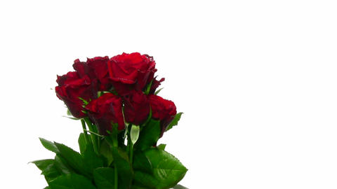 Rotating bouquet of red roses with water drops, endless... Stock Video Footage