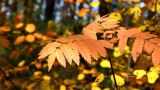 Autumn stock footage