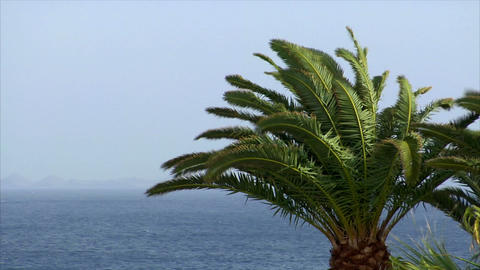 palm and ocean on sunny windy day Footage