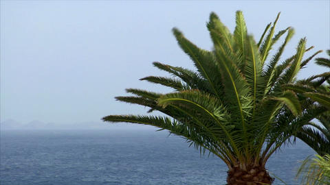 palm and ocean on sunny windy day Stock Video Footage