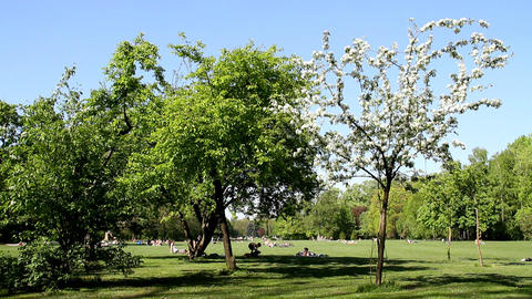 Park at Spring Stock Video Footage