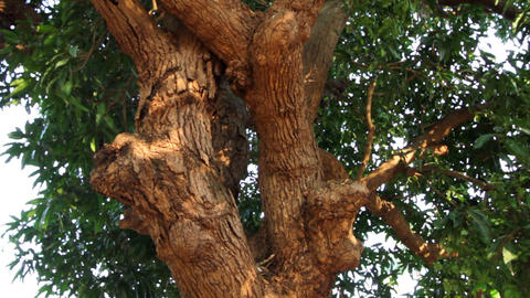 beautiful tree with foliage closeup Stock Video Footage