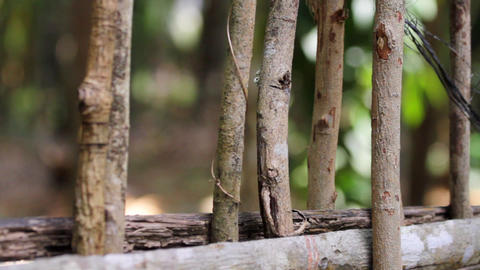 wooden fence Stock Video Footage