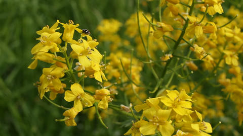 Bug on a flower Stock Video Footage