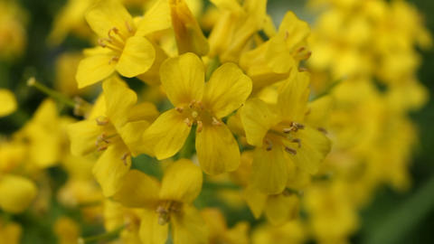 Yellow flower close up Stock Video Footage