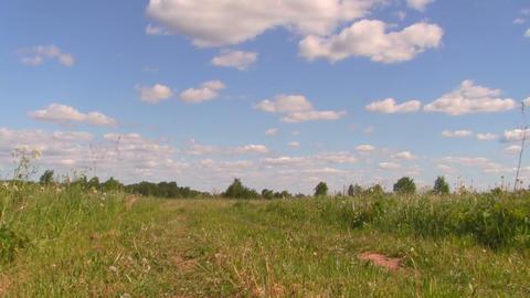 cornfield Footage