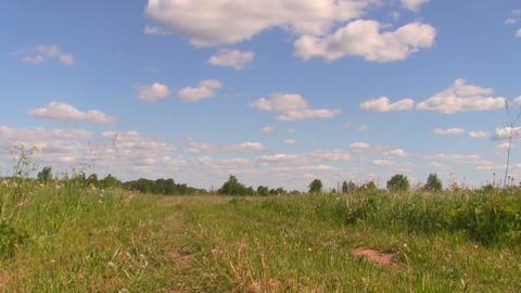 cornfield Stock Video Footage