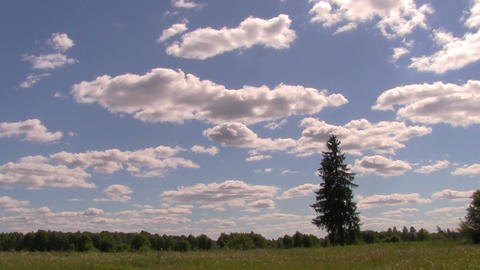 tree in field Stock Video Footage