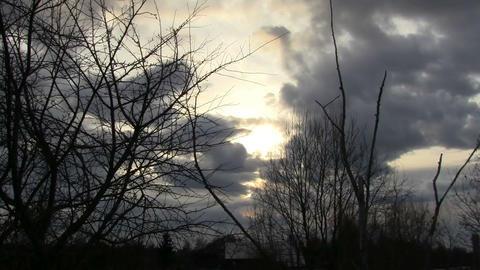 Dead tree Stock Video Footage