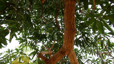 beautiful branch of a tree with leaves close-up Stock Video Footage