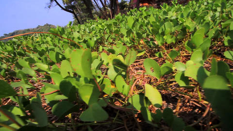 plants from the sea Stock Video Footage