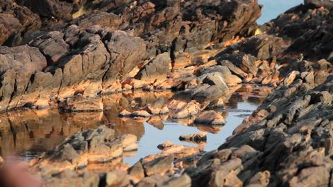 Sea and rocks Footage