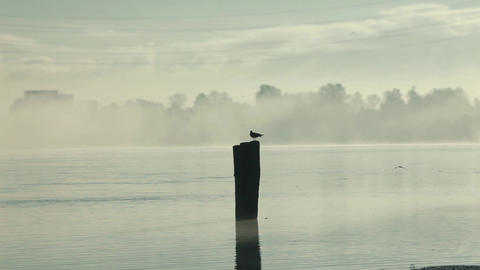 Foggy morning on the river Footage