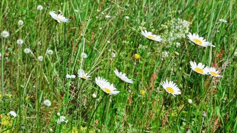 Meadow flowers swaying Footage