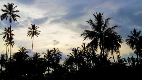 Palm trees on the ocean at sunset - time lapse Footage
