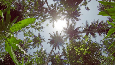 The tops of tropical trees and palms Footage