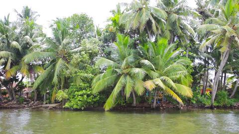 Sri Lanka. Bentota. Village on the banks of the ri Footage
