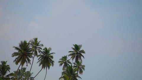 Group of tropical palm trees against the sky Footage