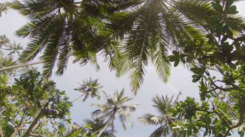 The tops of tropical trees against the sky Footage