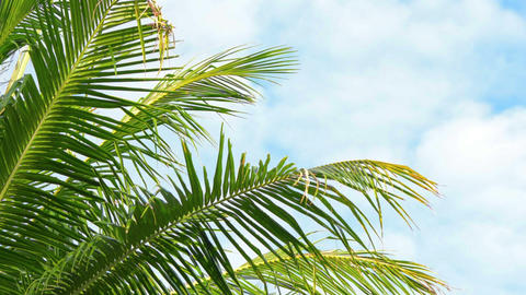 Leaves of palm trees swaying on sky background clo Footage