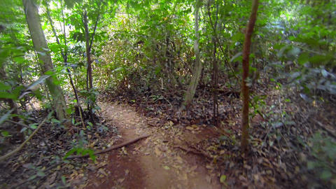 Fast running along the winding path in the rainfor Footage