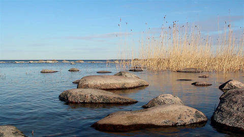 Some rocks and reeds on the water Footage