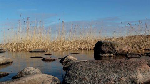 Tall brown reeds on the coastline Footage