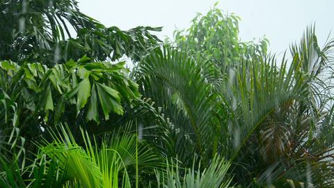 Rainy season in the tropics Footage