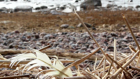 Withered stems from reeds on the ground Footage