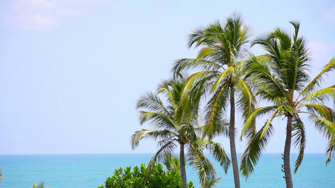 Group of palm trees sways in the breeze Footage
