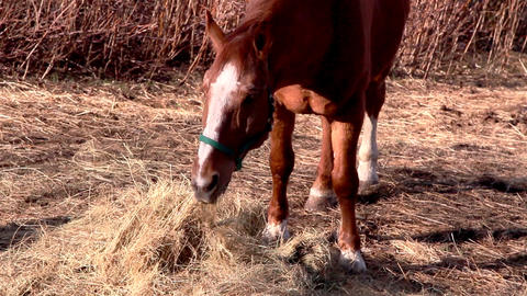 A brown horse grabbing some grasses Footage