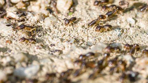 Termites below the ground Footage
