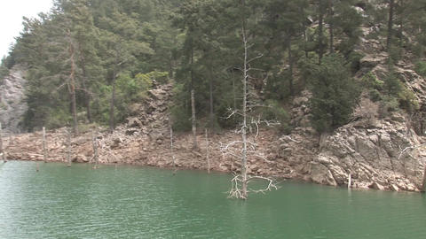 Dead trees in the Green Canyon Stock Video Footage