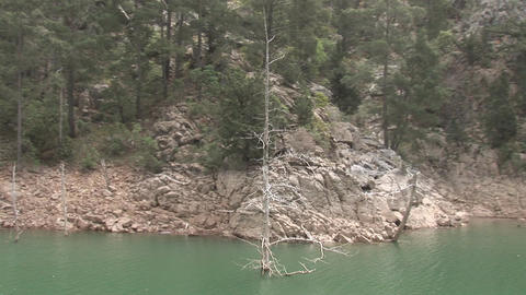 Dead trees in the Green Canyon Footage