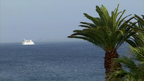 palm with boat in background Stock Video Footage