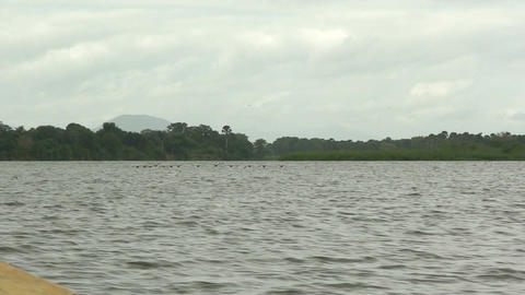 Malawi: birds flying above the lake Stock Video Footage
