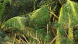 Ecology 8tropical Forest stock footage