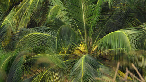 ecology 8tropical forest Stock Video Footage