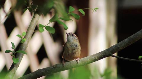 Little bird on a tree Stock Video Footage