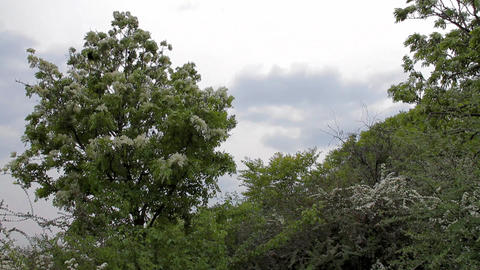 Lush Plants on Cloudy Day 01 Stock Video Footage