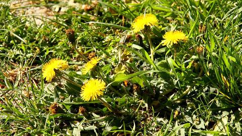 Spring Flowers Footage