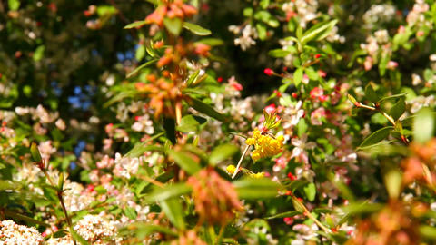 Spring Plants Stock Video Footage