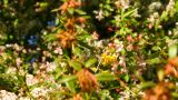Spring Plants stock footage