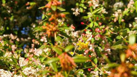 Spring Plants Footage