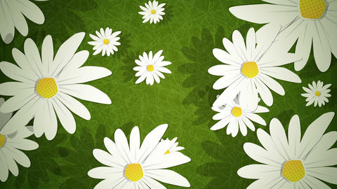 Summer Daisies Loop HD Stock Video Footage