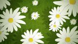 Summer Daisies Loop HD stock footage