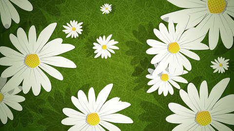 Summer Daisies Loop HD Animation
