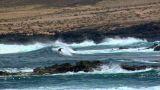 Dangerous Surfing Between Lava Rocks 2 stock footage